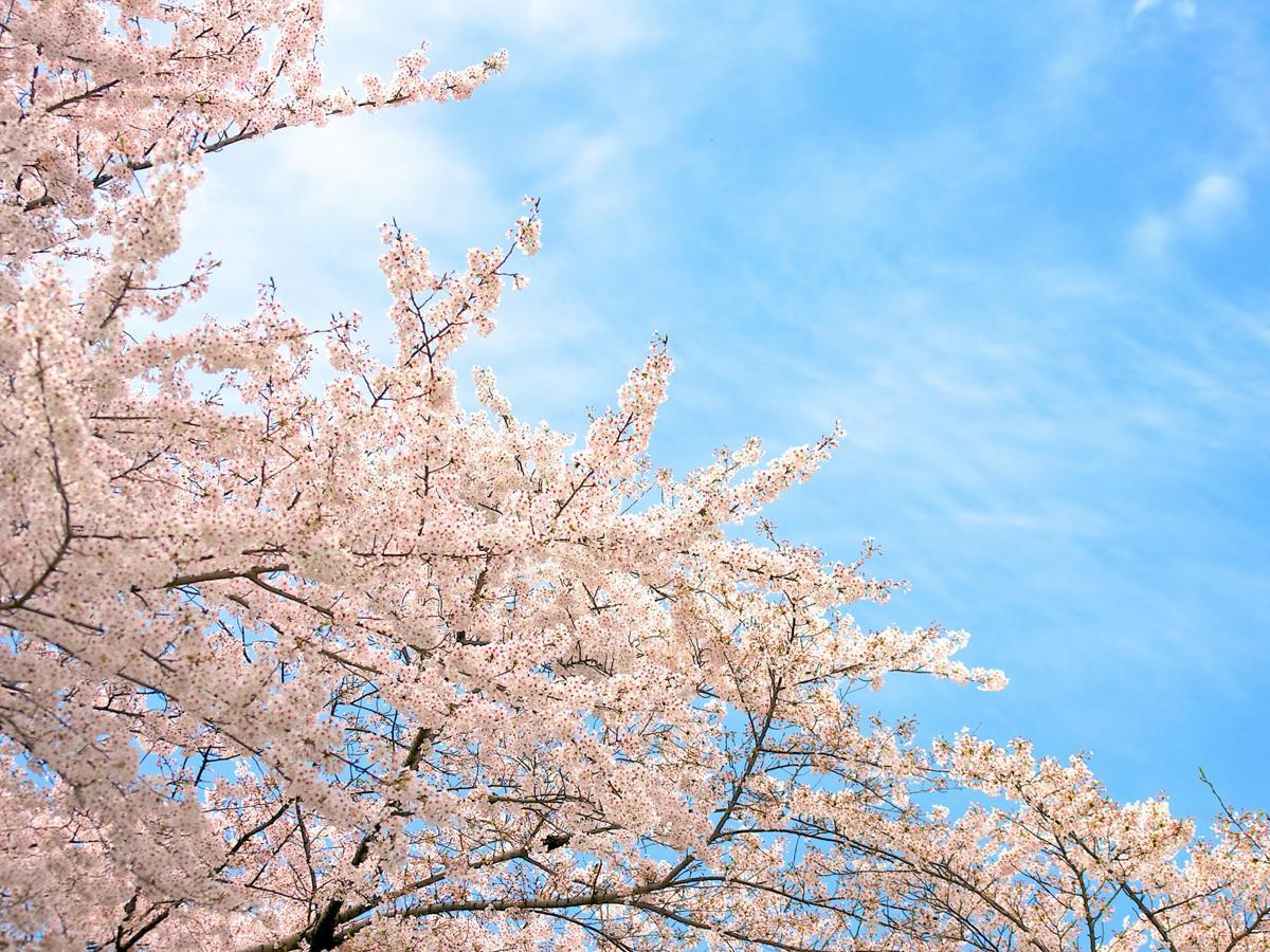Special Collection of Nagoya Flower Viewing Events in 2020